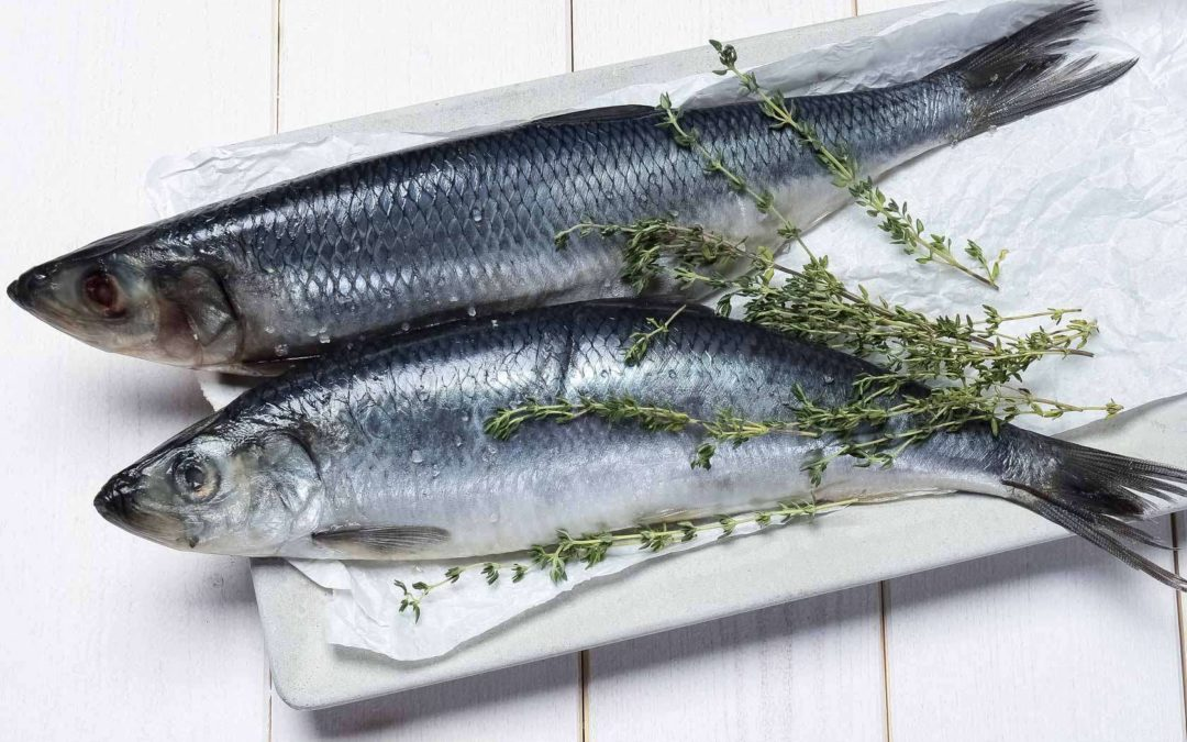 What Is Herring Fish